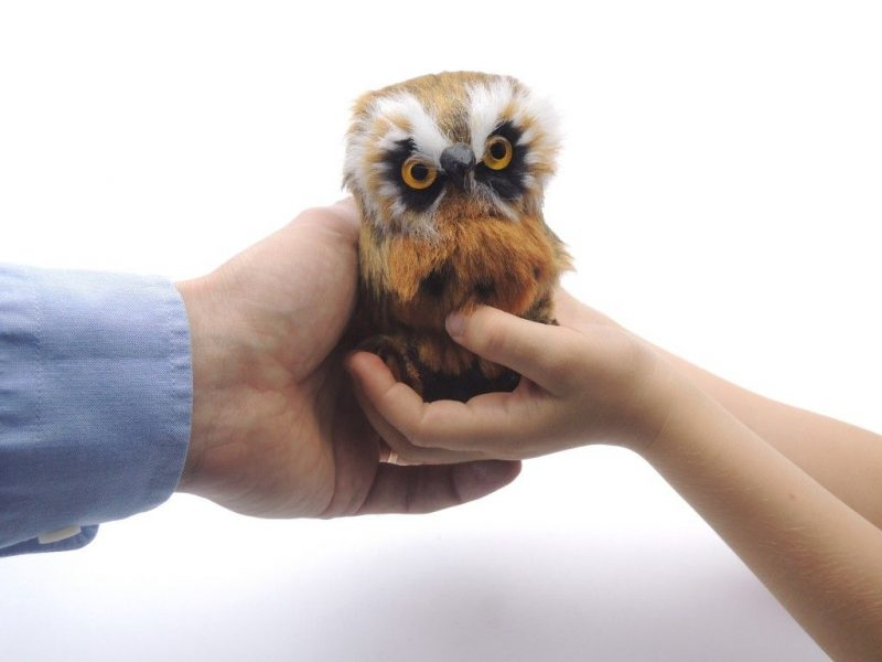 Символ совы и его магическое значение