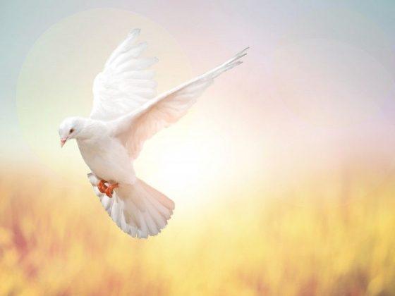 Приметы о белом голубе