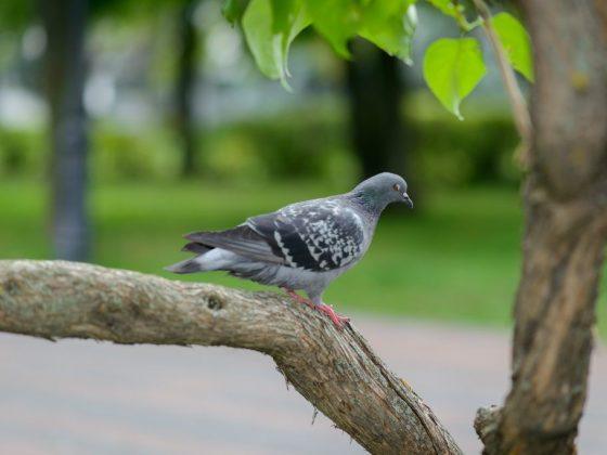 Что будет, если голубь сядет на голову