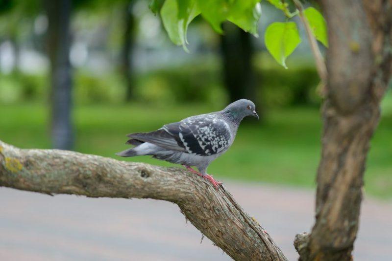 Примета голубь насрал на голову