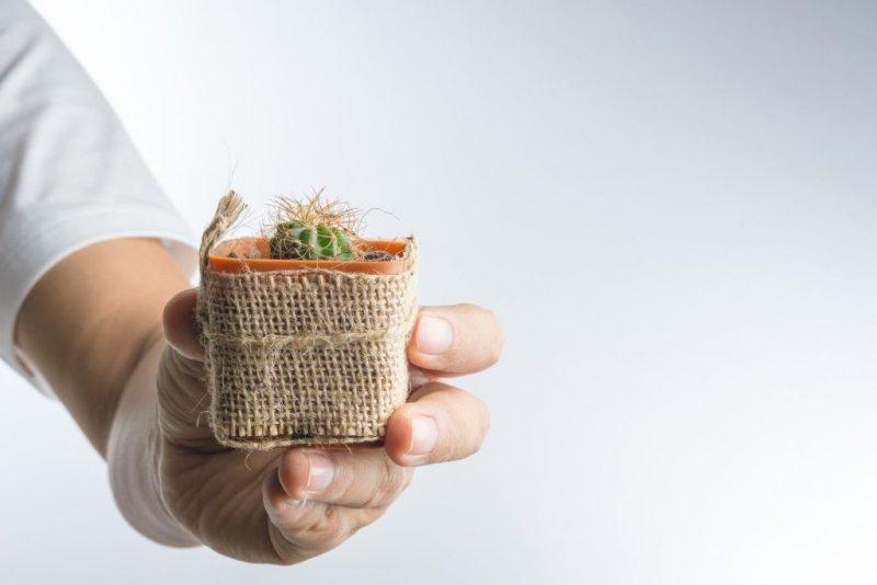 Можно ли держать кактусы дома? Кактус домашний: польза и вред, народные приметы и суеверия. Кактус в подарок: значение, примета