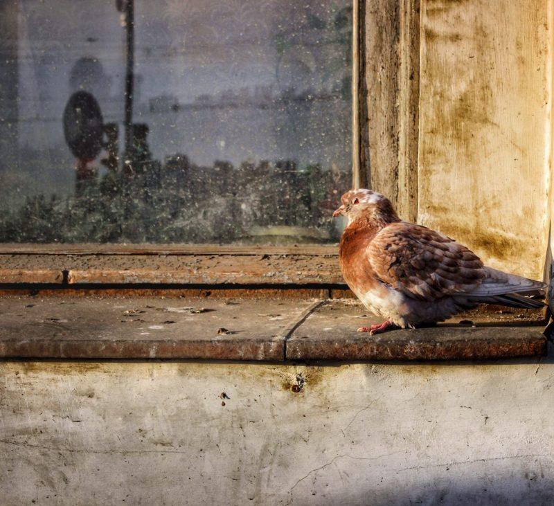 Чего ожидать, если голубь сел на голову