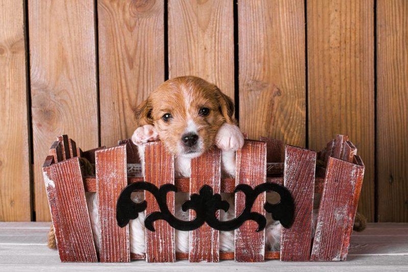 Обряды и заговоры на продажу щенков и котят