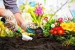 Как защитить огород от сглаза и порчи
