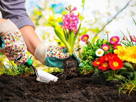 Как защитить огород от сглаза и порчи: как снять