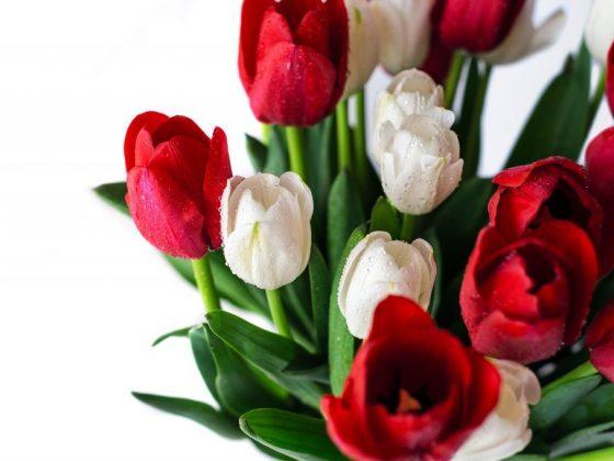 Как навести порчу на цветы