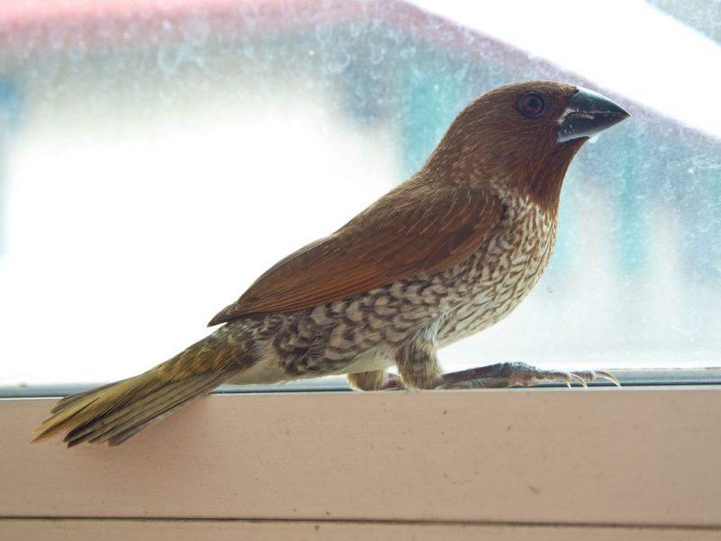 Примета: к чему птица бьется в окно
