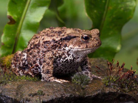 Лягушка или жаба в доме