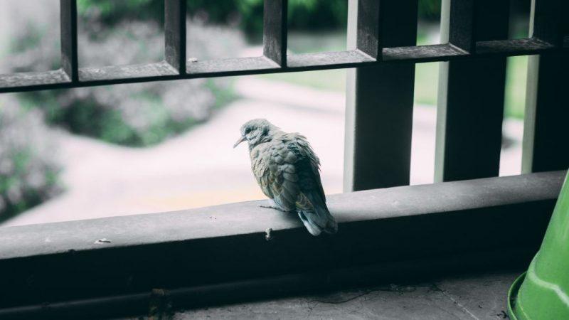 Сбить птицу на машине - Приметы
