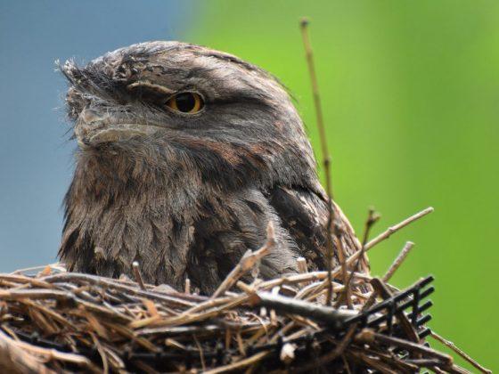 Птица свила гнездо в доме