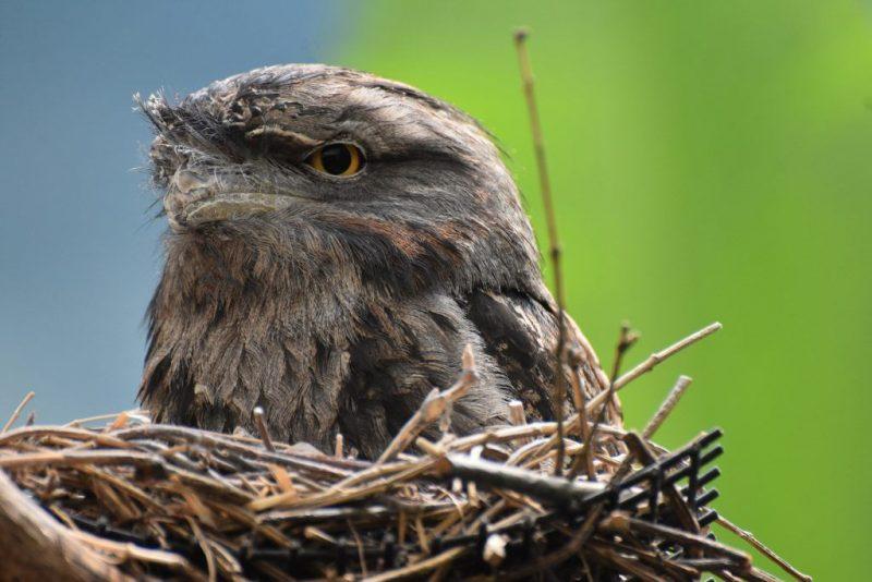 Ласточки свили гнездо – примета