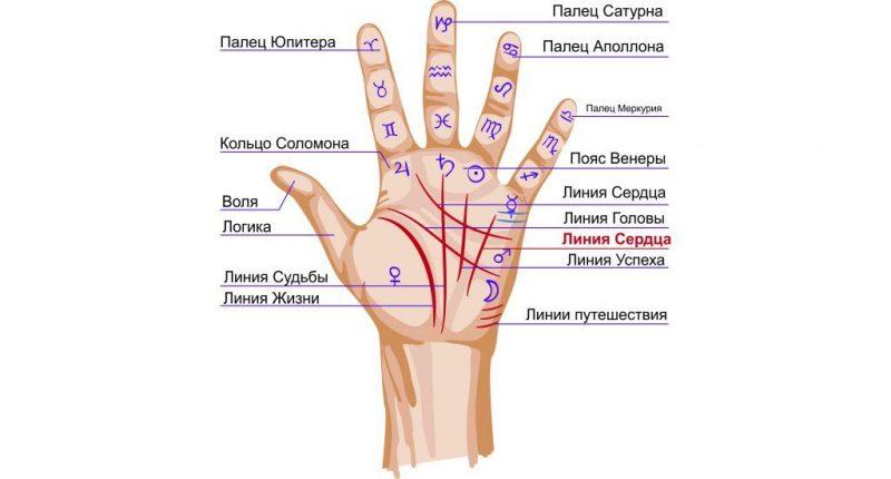 Линия сердца на руке — фото с описанием и значение