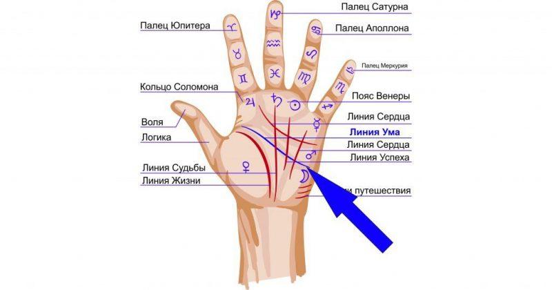 Линия ума на руке: толкование знаков