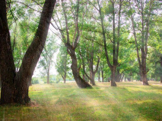 Приметы и суеверия на погоду на месяц июль