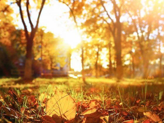 Народные приметы на погоду осенью
