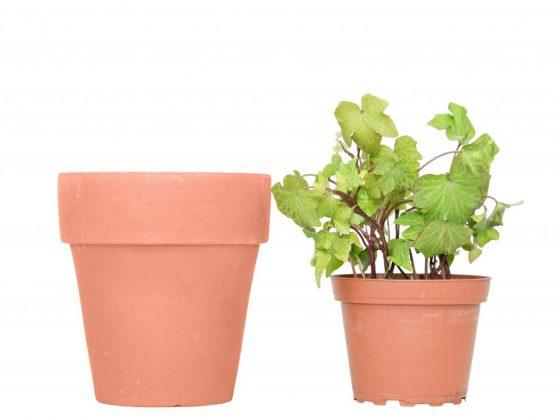 Одиноким девушкам держать дома растение нельзя