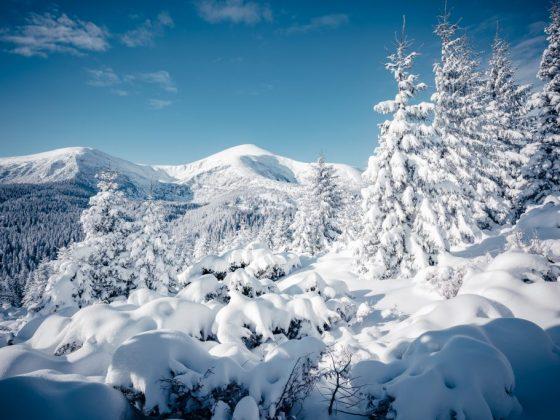 Снег в Рождество сулит хороший урожай