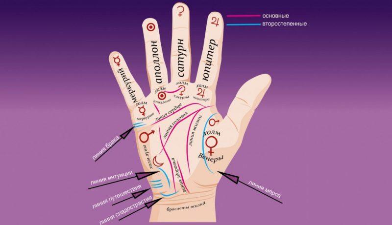 Расположение и значение основных линий на руке