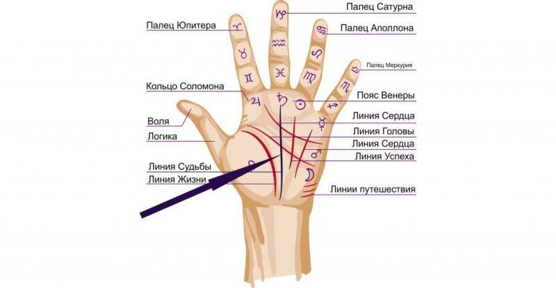 Линия судьбы на руке: фото с расшифровкой