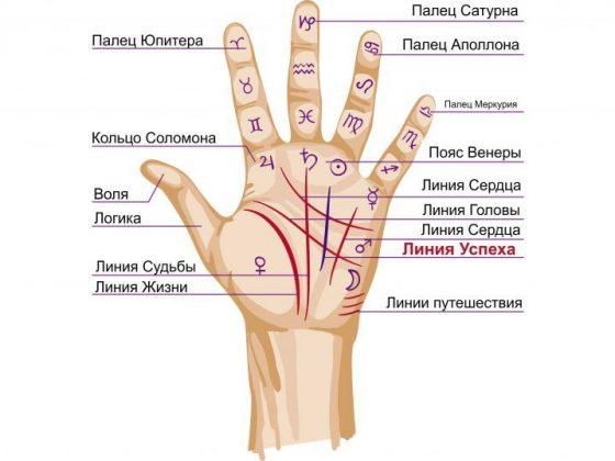 Линия успеха на руке