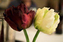 Приметы о четном количестве цветов в букете