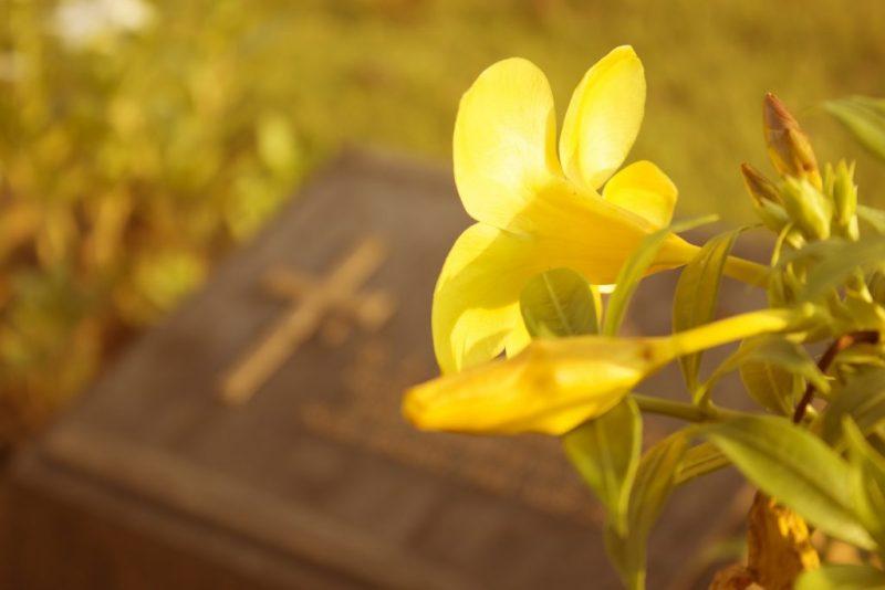 Китайская роза: приметы про цветок смерти