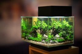 Правила размещения аквариума по фен-шуй