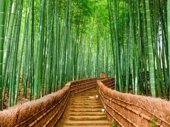 Значение бамбука по фен шуй