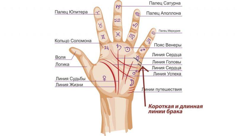 Линия брака на руке: что означает, на какой руке находится? Хиромантия — гадание по линии брака на руке: расшифровка, фото