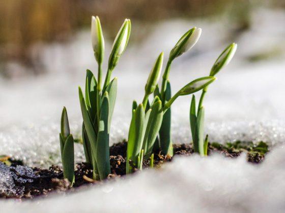 Удачное начало весны