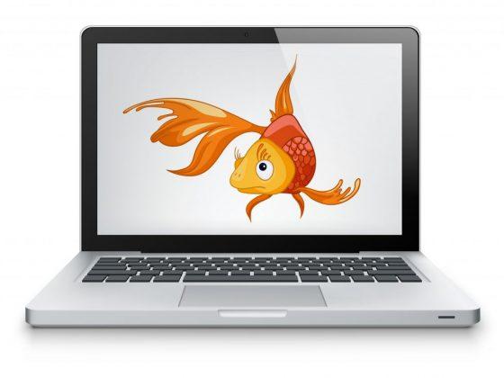Гадание Золотая рыбка