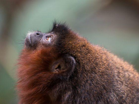 Примат на дереве сулит интересное знакомство