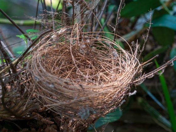 Гнездо символизирует вступление в брак