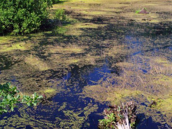 По соннику Ванги, болото обозначает препятствия и проблемы