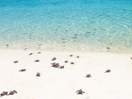 Гулять около большого количества черепах – к долголетию