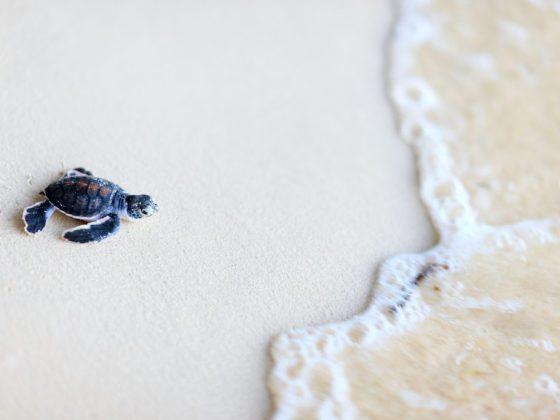 Маленькие черепашки предвещают небольшие, но значимые достижения