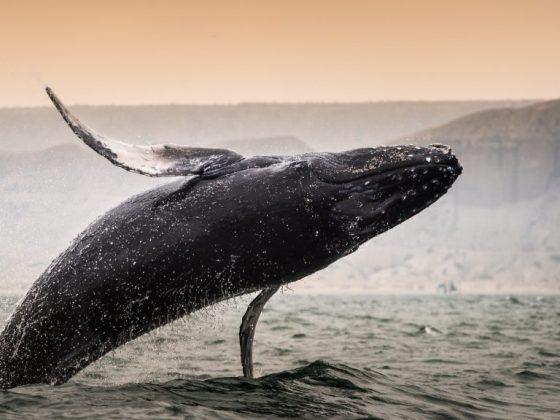 Приснился кит мужского пола – к бурному роману