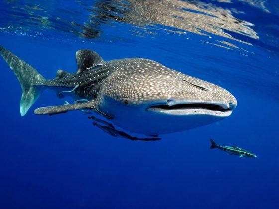 Если снится кит в воде, то это к крупной прибыли