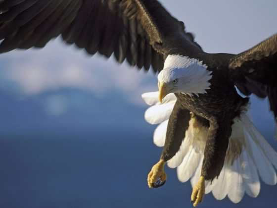 Орёл символизирует защитника