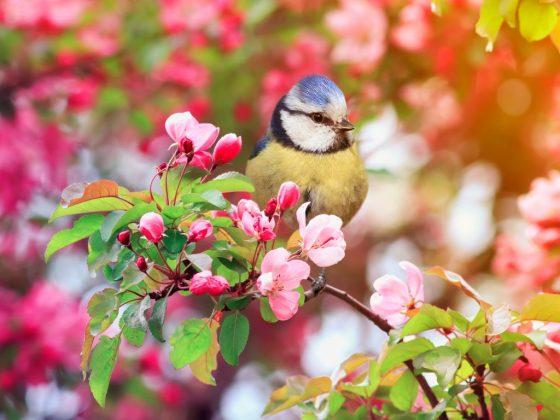Значение сна зависит от вида птицы