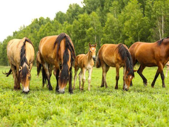 Восхищение лошадьми поможет добиться цели