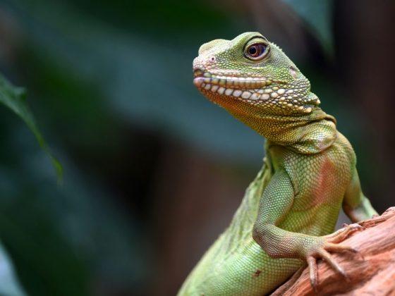 Укус рептилии сулит финансовые трудности