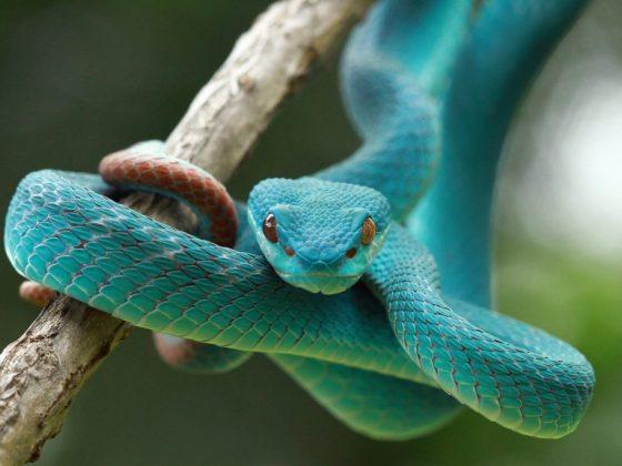 Спящая змея сулит большое везение