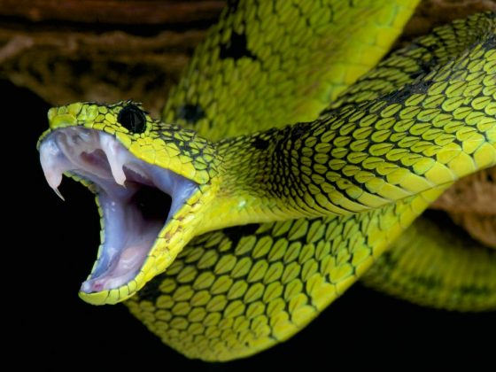 Змея снится тревожным людям