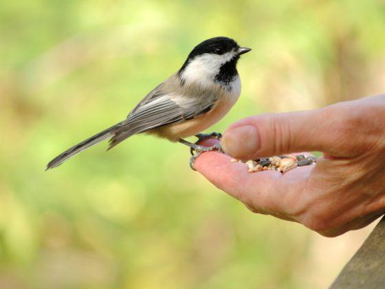 Кормить птицу к удаче
