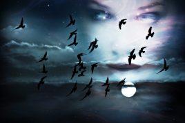 Птицы во сне для женщины