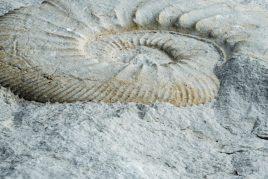 Свойства камня аммонит