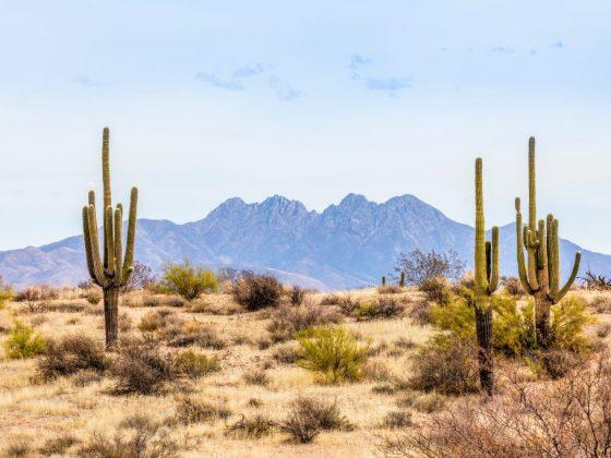 Что означает пустыня во сне