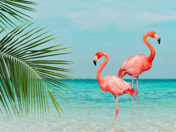 Розовый фламинго на счастье