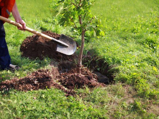 Каждый сорт дерева снится к разным событиям